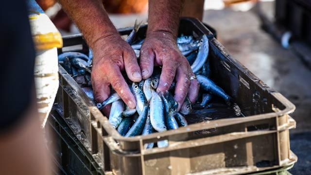 Komiški ribari prodaju svježu ribu na rivi
