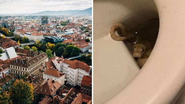 Strava u Grazu: Piton zgrabio muškarca za penis na wc-u