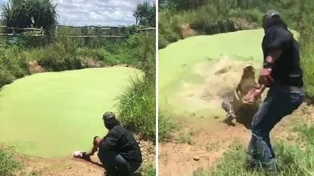 Savršena kamuflaža: Iz mirne bare u sekundi iskočio krokodil