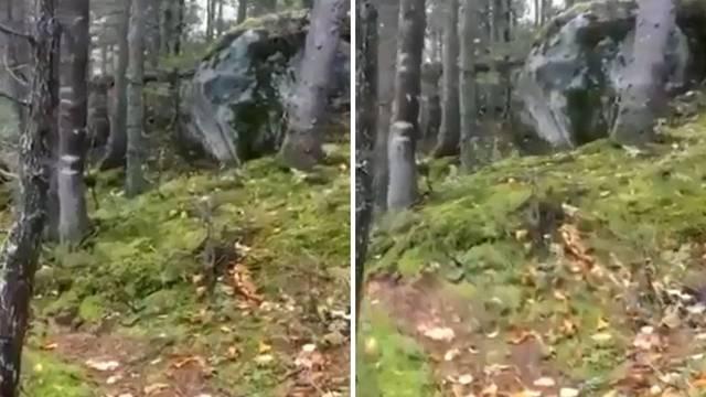 VIDEO Internetom se širi lažna snimka potresa koji guta šumu
