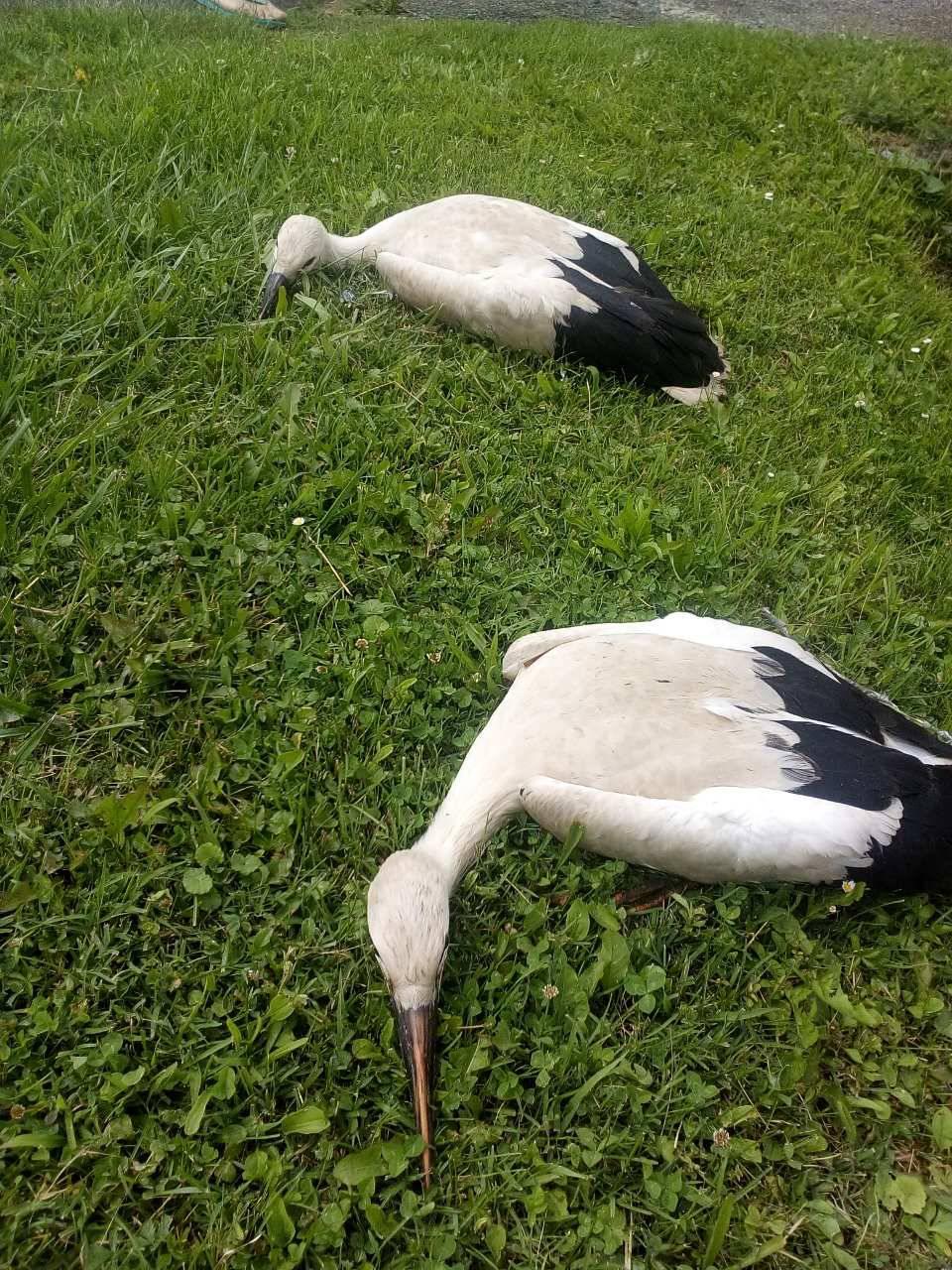 Sa stupa palo gnijezdo s malim rodama, dva ptića su uginula...