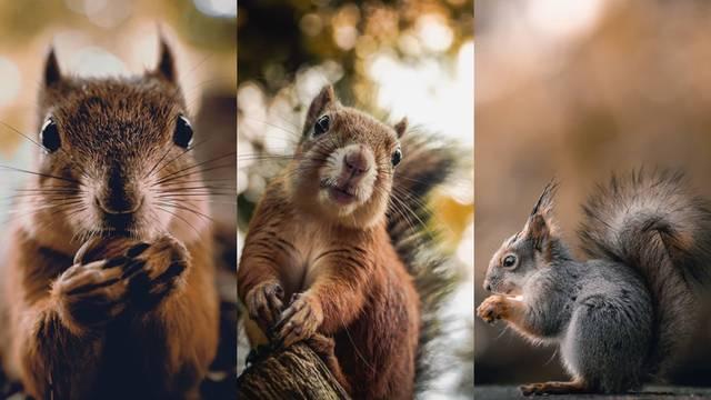 Dvije godine snimao je samo vjeverice: Rezultat je presladak