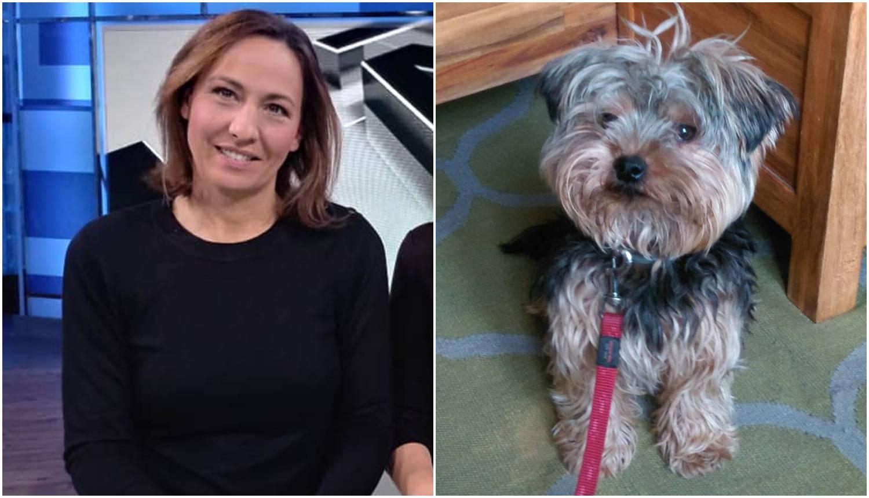 Voditeljici ukrali psa: Muškarac ga je dozivao, pa strpao u auto