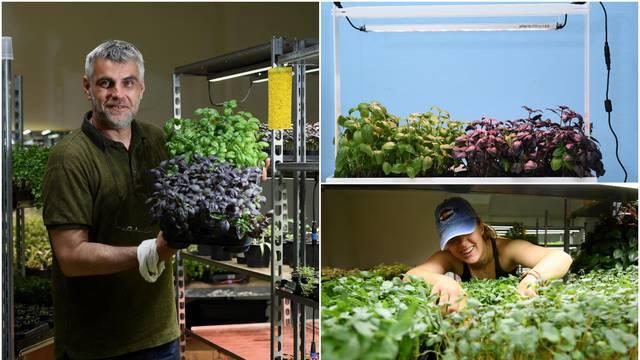 Napravili farmu pod zemljom na Kvatriću: Jedini tako sadimo začine i mikrozelenje u Europi
