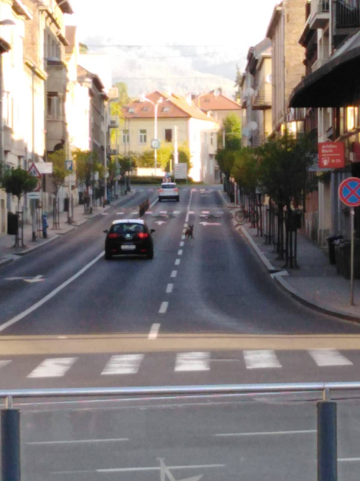 Izazvala čuđenje: Malena srna 'skakutala' po centru Zagreba