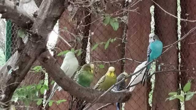 Otvara se prvi hrvatski park za ptice u šumi nedaleko od Poreča