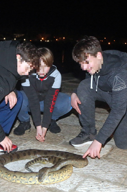 Anakonda u Vodicama? Dječaci iz mora izvukli zmiju od 2,5 m