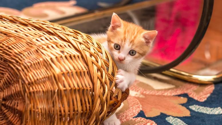 20 simpatičnih ideja kako u domu urediti kutak za mačku
