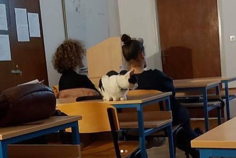 Mačak na faksu: Zvonko ide na predavanja, a spava u knjižnici