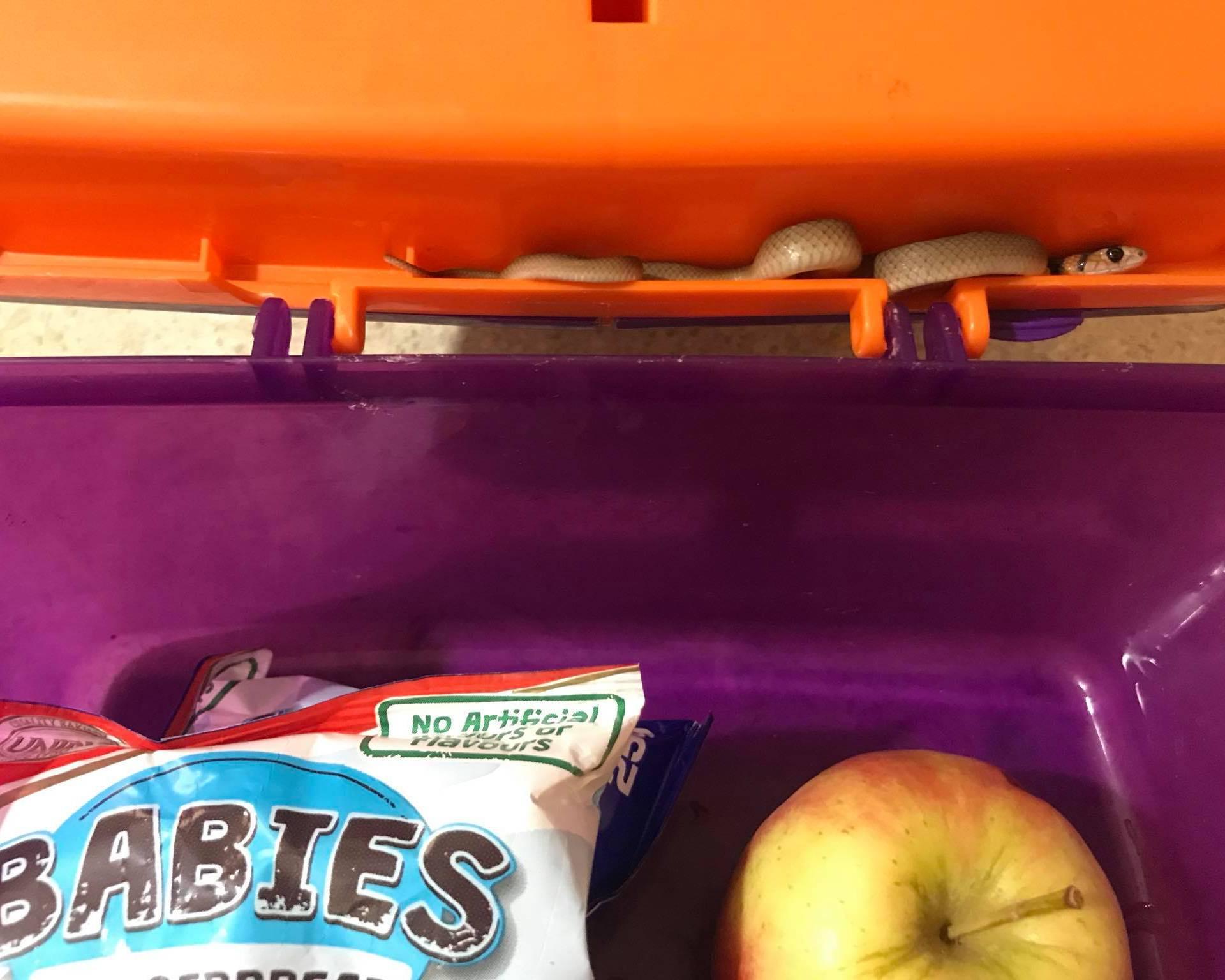 'Za ručak u školi imaš jabuku, sendvič i - smrtonosnu zmiju'