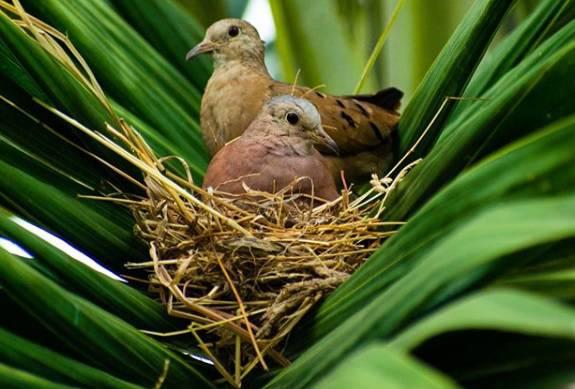 Ptičje gnijezdo