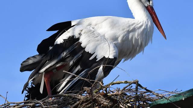 Rode se vraćaju u Brodski Varoš, a Malena slomljenog krila sama gradi svoje gnijezdo
