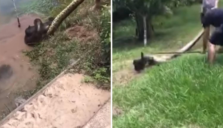Spasili  psa od sigurne smrti: 'Štapom sam tukao anakondu'