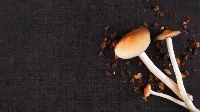 Oregon je prva država koja je legalizirala 'čarobne gljive'