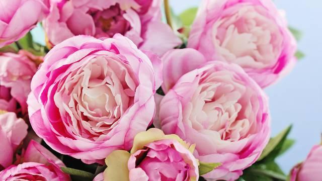 Božur: Ovaj raskošan i otmjen cvijet donijet će sreću u ljubavi