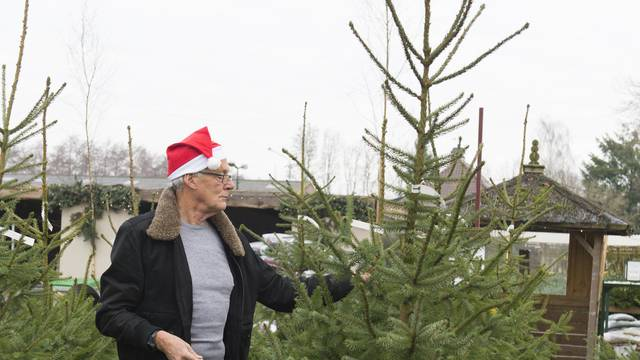 Zbog pandemije korone ljudi više kupuju prava božićna drvca