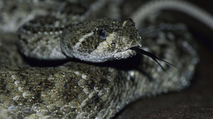 Iznenađenje kod Dubrovnika: U perilici rublja pronašli su zmiju