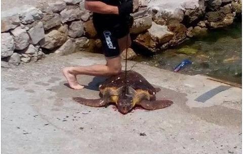 Ostima ubio želvu: 'Kornjača je bila opasna, napadala je ljude'