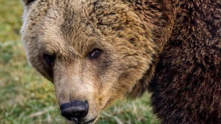 Strava u BiH: Čovjeka je napao medvjed i otkinuo mu stopalo