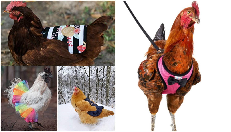 Uz ove modne dodatke i vaša kokoš može biti 'modna ikona'