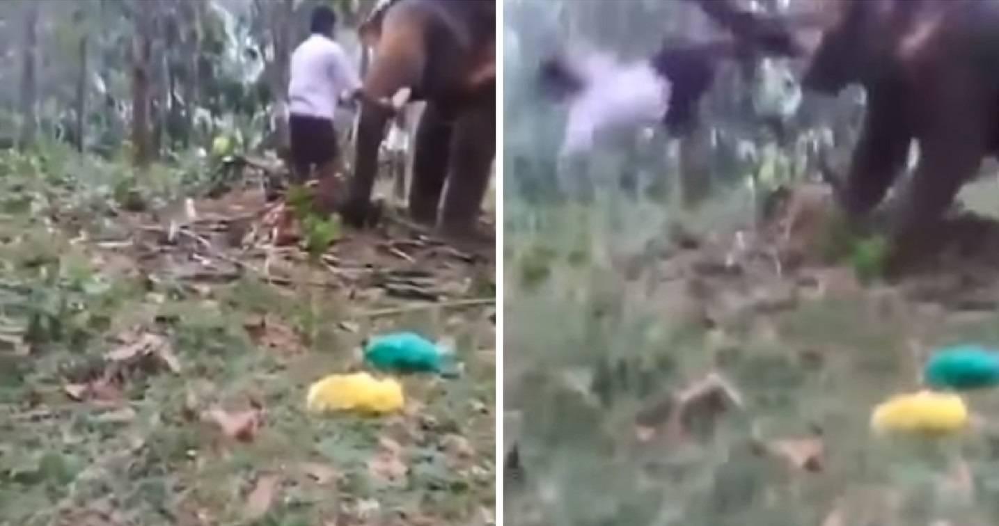 Slon surlom odbacio mladića