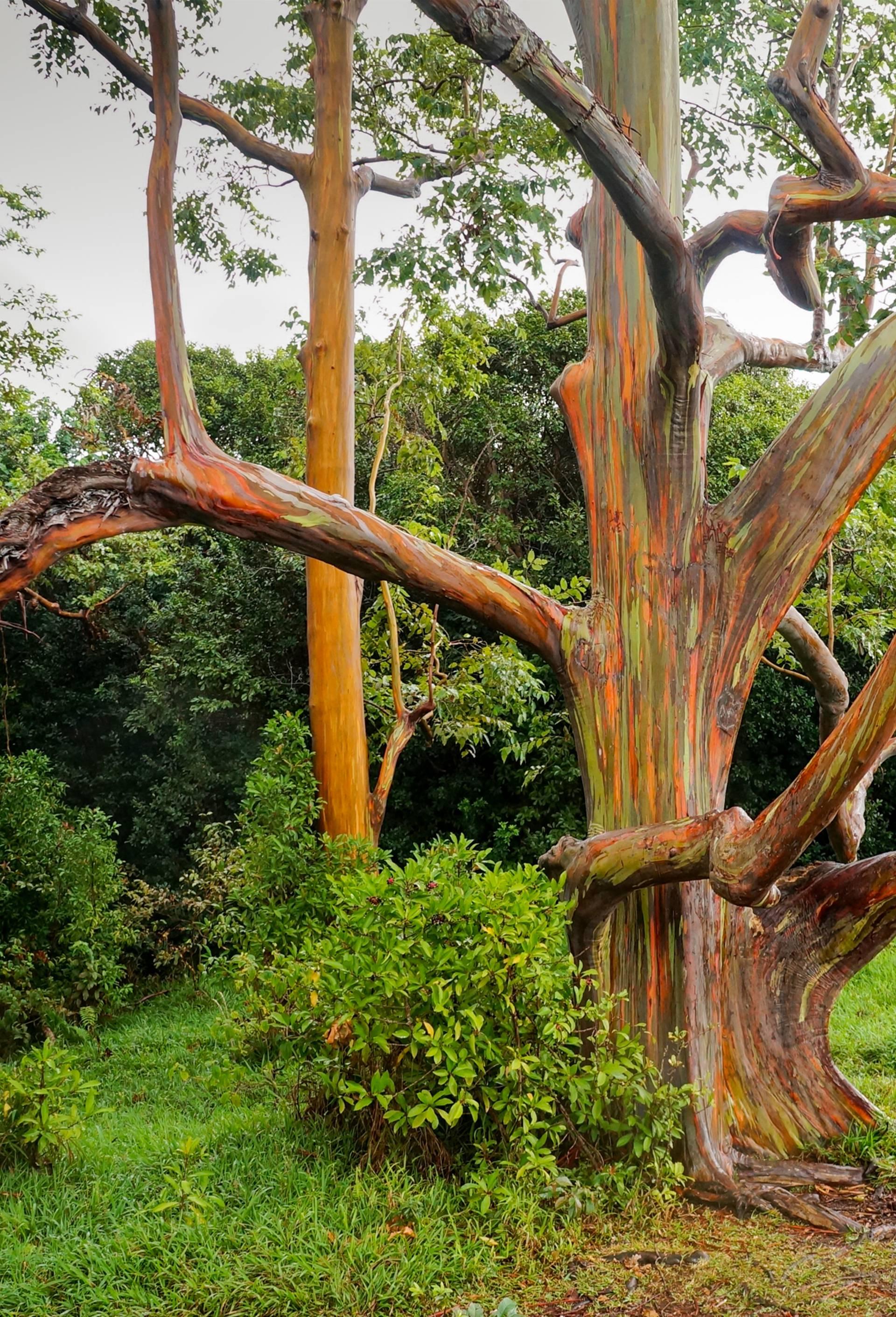 Čudesno drvo poprima dugine boje i stvara prekrasne slike