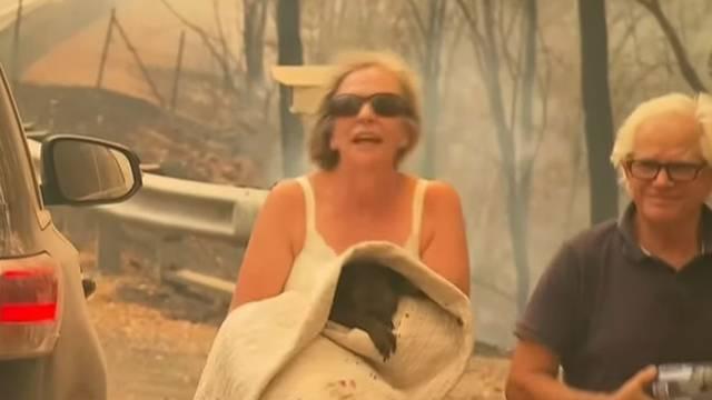 Uginula je koala Lewis koju su prošlog tjedna spasili iz požara