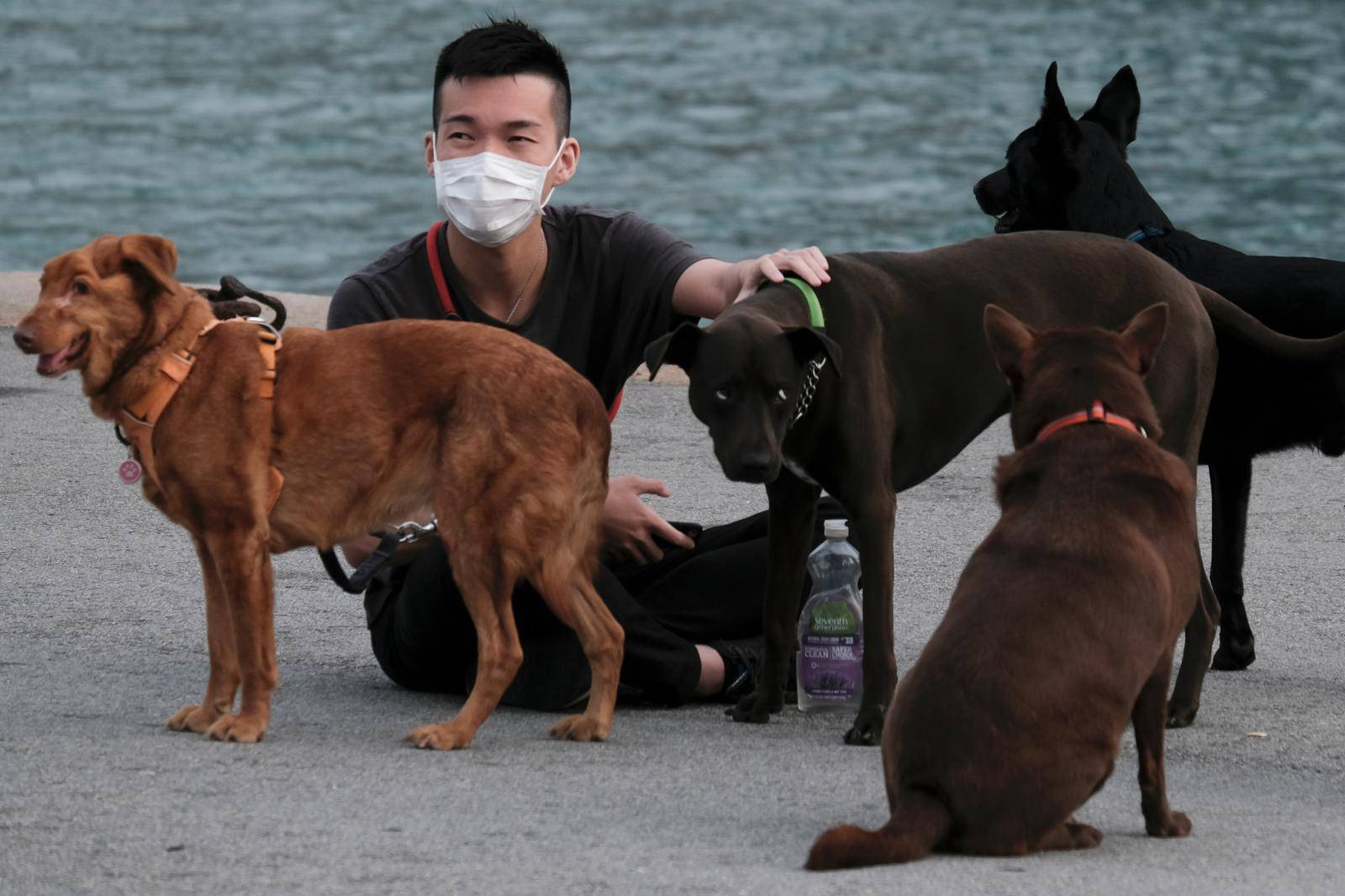 A man wears a protective face mask sitting next to his dogs, following the outbreak of the new coronavirus, in Hong Kong