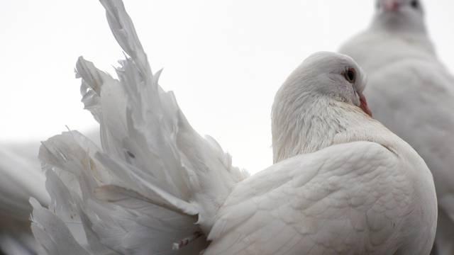 Zauvijek vjerne: Životinje koje cijeli život vole jednog partnera