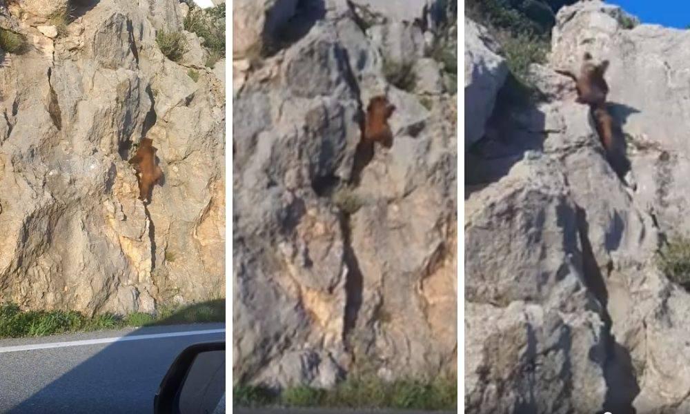 Medo alpinist kraj Karlobaga: 'Čim nas je vidio, pobjegao je'