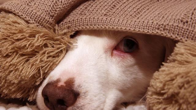 'Moj pas je predosjetio potres'