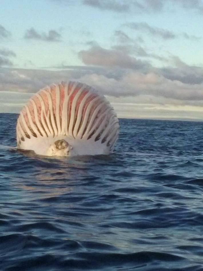 Zbunjeni ribari: Što je smrdljivi rozi plutajući balon na vodi?