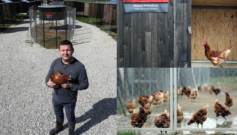 Kokošvaroš: Kod Željka kokice na dan snesu do 300 eko jaja!