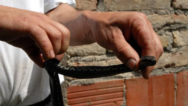 Horor u Slavonskom Brodu: Otrovna zmija riđovka ugrizla dječaka (7) na dječjem igralištu
