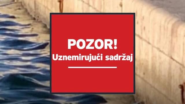 Horor u Splitu: Mačka zaglavila u vezištu brodova i utopila se