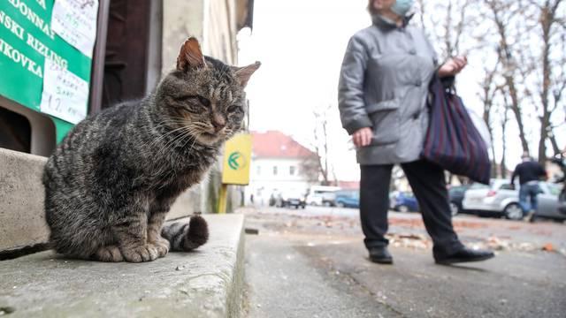 Petrinja: Posljedice jutrošnjeg potresa vidljive su na gradskim ulicama