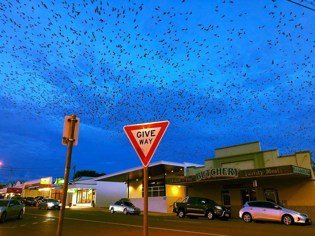 Grad šišmiša stvarno postoji - a zbog najezde lokalci 'lude'