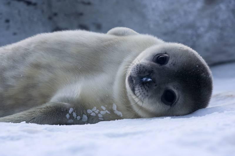 Žena uzela mladunče tuljana: Na kraju su ga morali uspavati