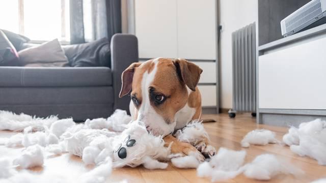 8 stvari koje psi ponekad mrze: Zagrljaji, šetnje u krivo vrijeme