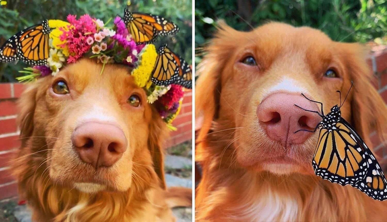 Pas Milo obožava leptire iz svog vrta, a izgleda da i oni njega...