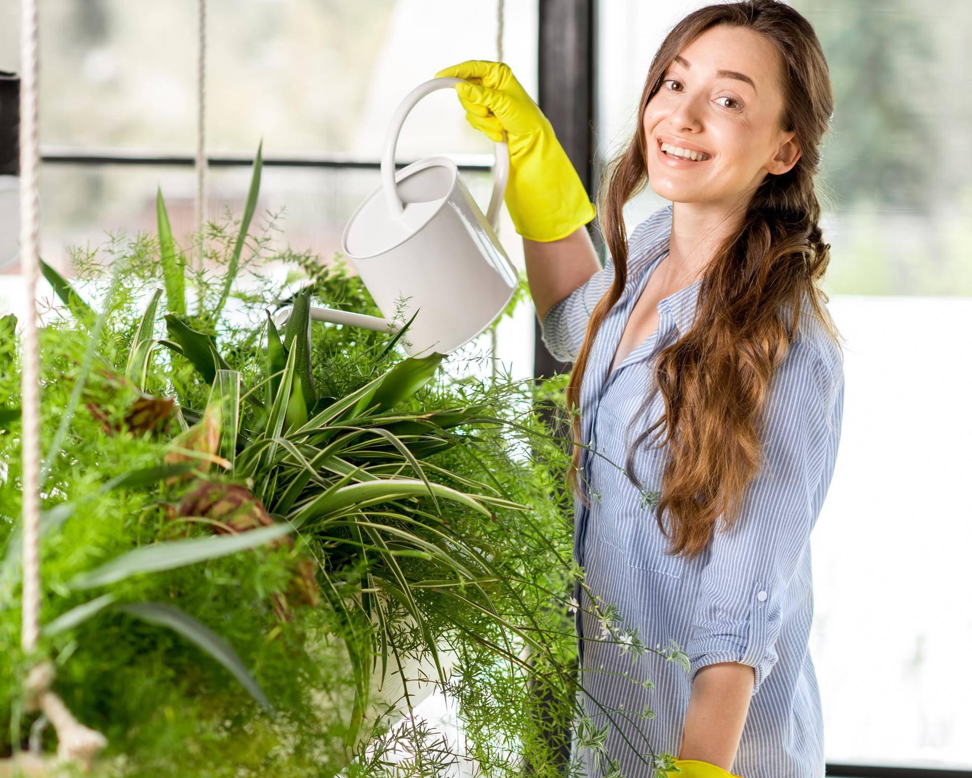 Sobne biljke ipak nisu važne za pročišćavanje zraka u prostoriji
