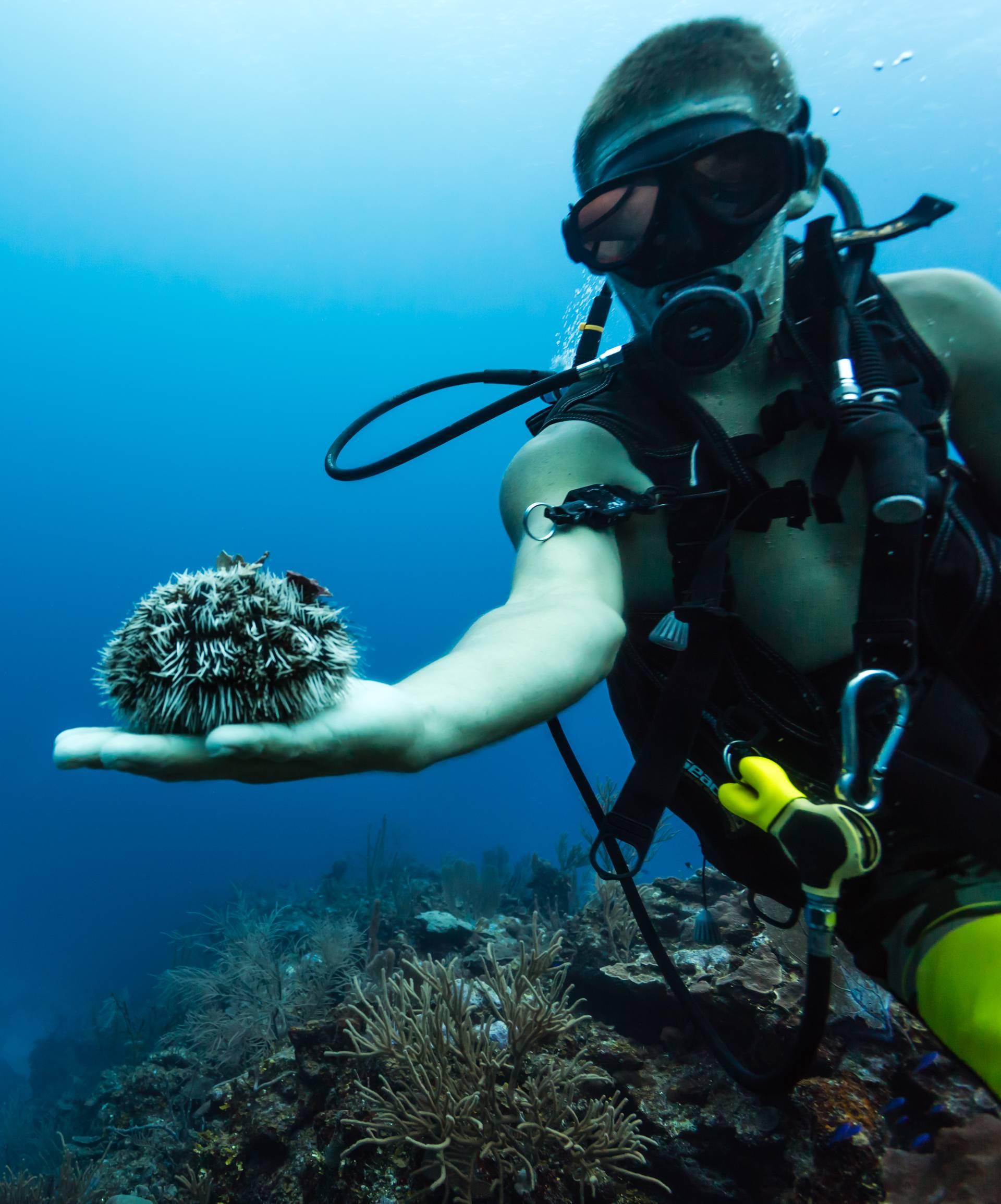 Prva pomoć za ljetne ozljede: Ocat ispire opekline od meduze