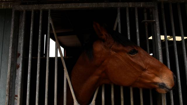 The Wider Image: Brexit: all bets off for Irish horse racing industry