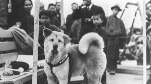 Najvjerniji pas na svijetu