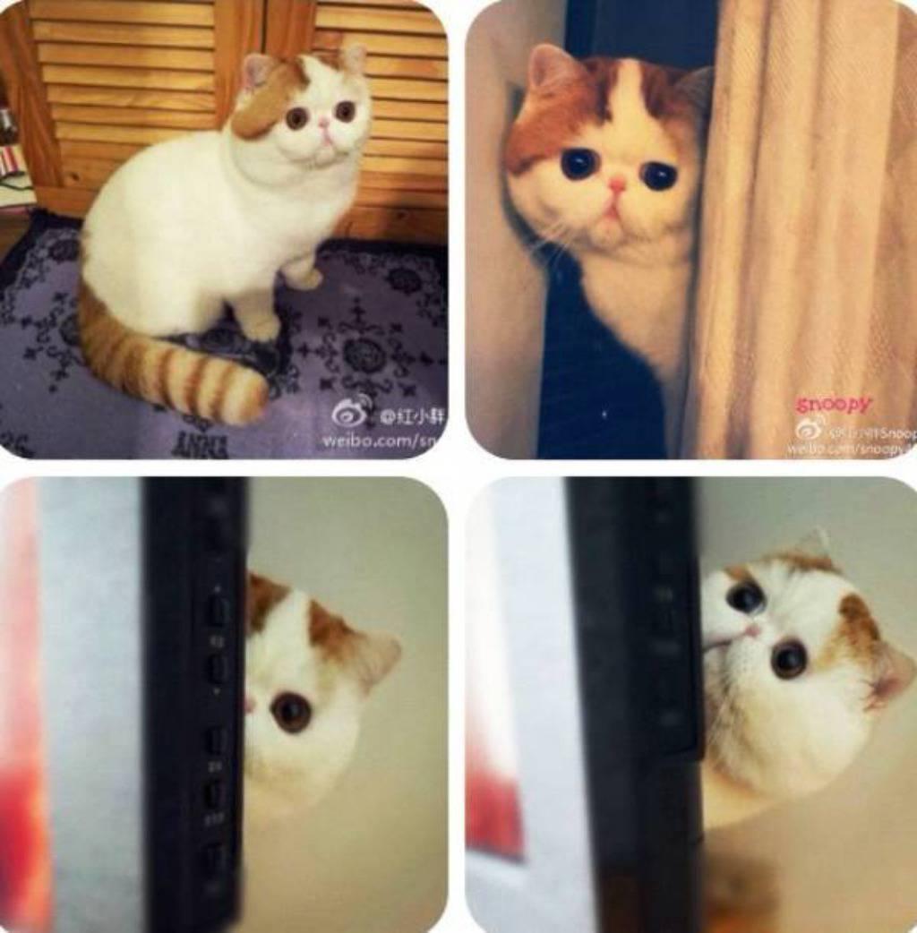snoopy cat/facebook
