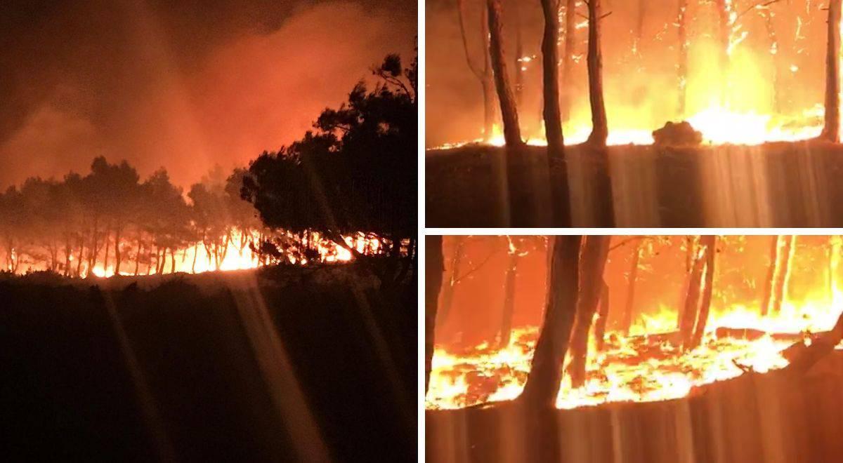 Dramatična snimka: Pogledajte kako požar guta šumu na Zrću
