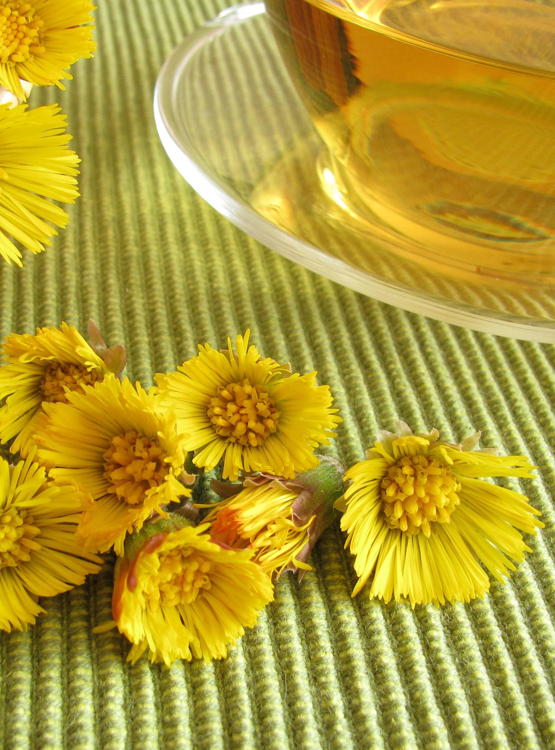Cvjetovi podbjela jestivi su te pomažu protiv kašlja i ekcema