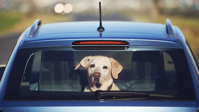 Travel with dog
