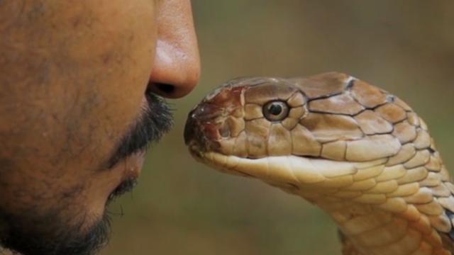 Poljubac koji ledi krv: Kobra mu je upravo ovako ubila oca