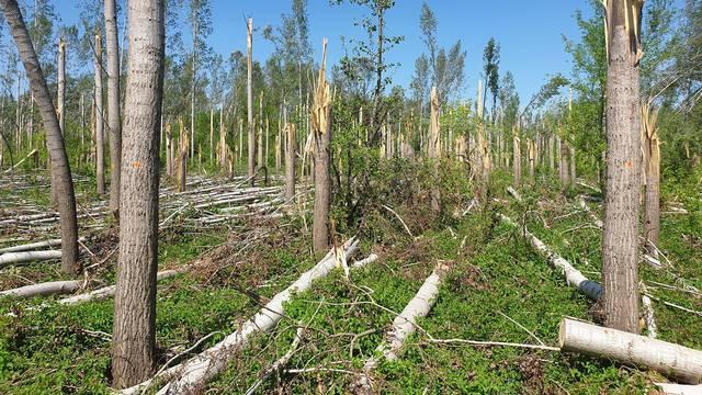 Savez izviđača Hrvatske prvih 10.000 stabala sade na jesen